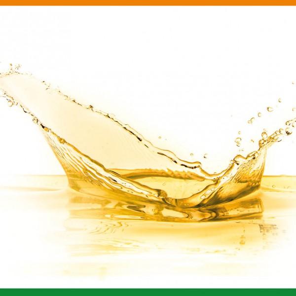 Bio Moringasamenöl (Eigenpressung)